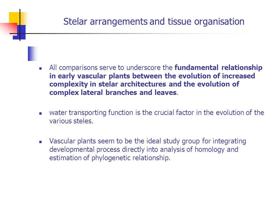 Stelar arrangements and tissue organisation All comparisons serve to underscore the fundamental relationship in early vascular plants between the evol