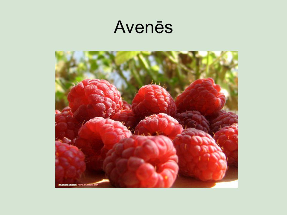 Avenēs