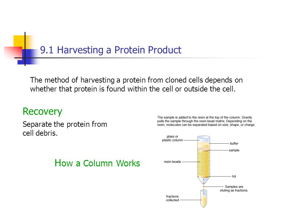 9.1 Harvesting a Protein Product The method of harvesting a protein from cloned cells depends on whether that protein is found within the cell or outside the cell.