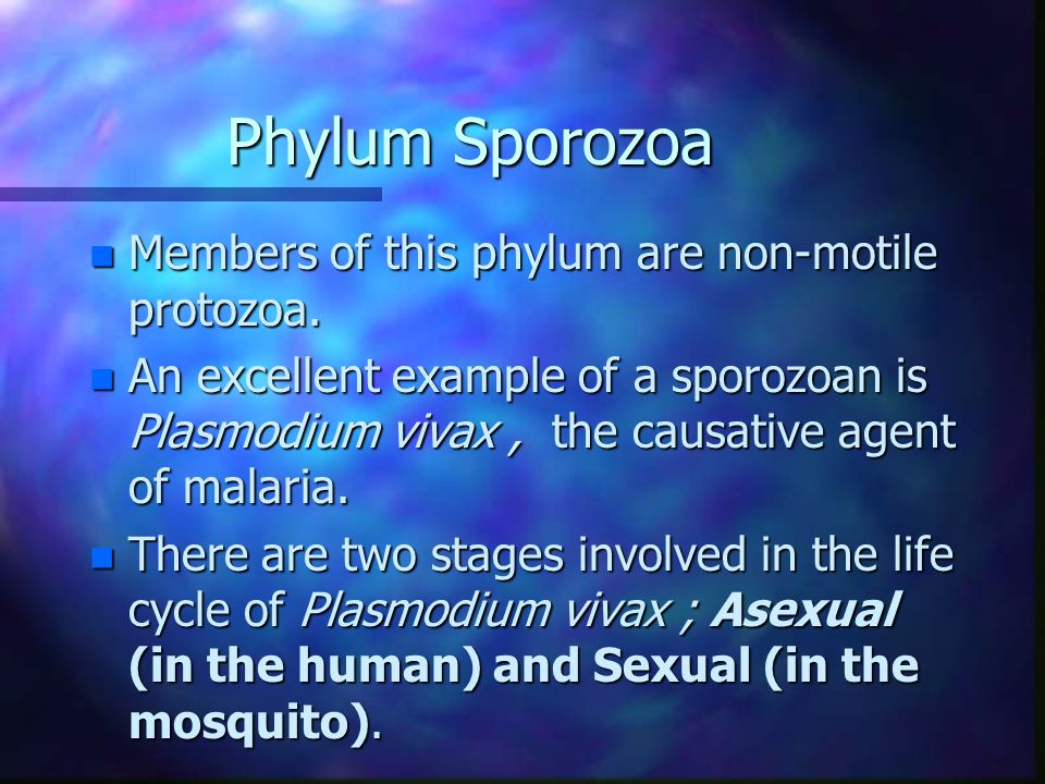 Phylum Sporozoa n Members of this phylum are non-motile protozoa.