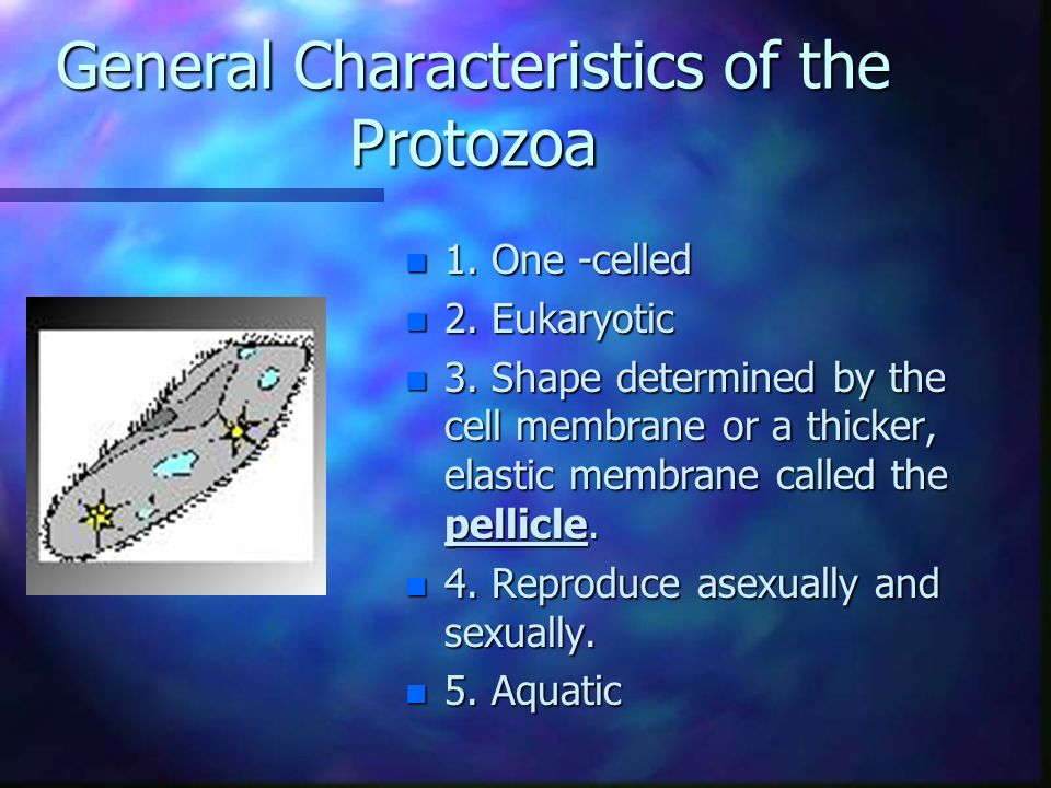 General Characteristics of the Protozoa n 1. One -celled n 2.