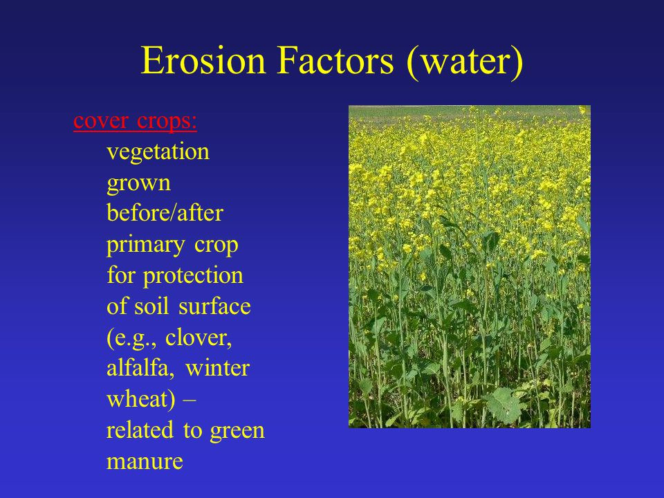 Erosion Factors (water) cover crops: vegetation grown before/after primary crop for protection of soil surface (e.g., clover, alfalfa, winter wheat) – related to green manure