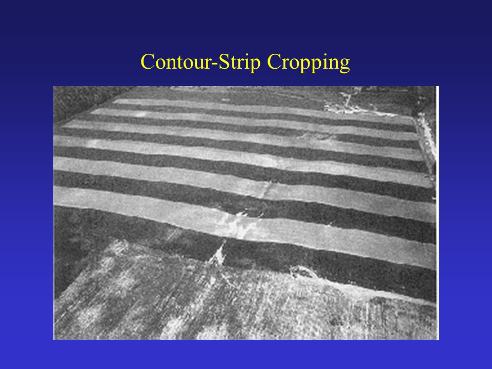 Contour-Strip Cropping