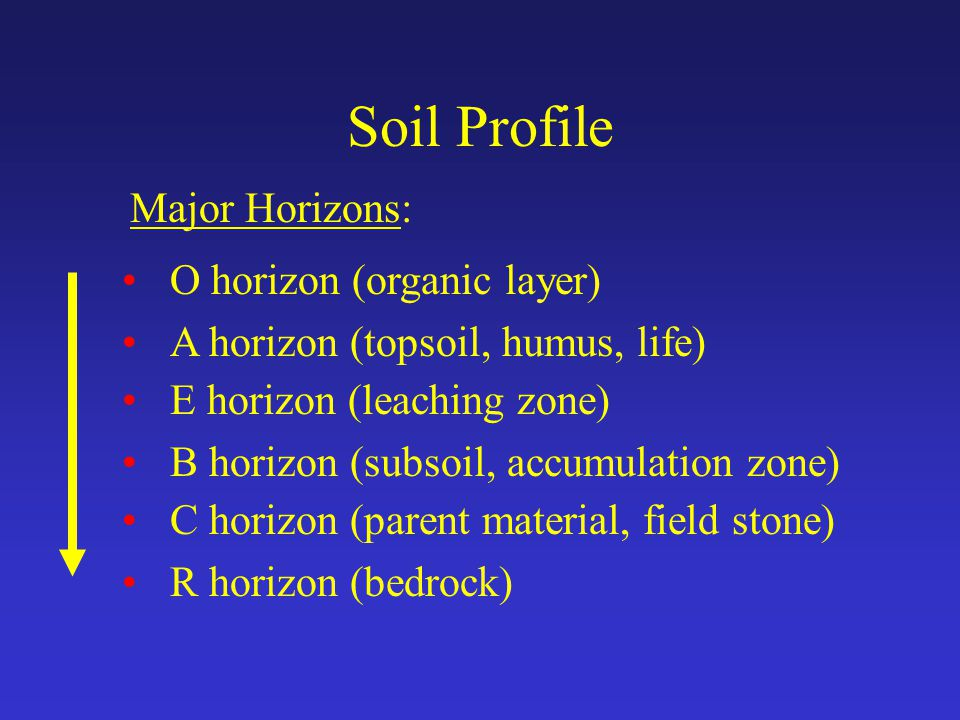 Soil Profile Major Horizons: O horizon (organic layer) A horizon (topsoil, humus, life) E horizon (leaching zone) B horizon (subsoil, accumulation zone) C horizon (parent material, field stone) R horizon (bedrock)