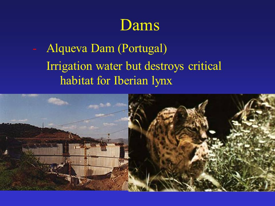 Dams -Alqueva Dam (Portugal) Irrigation water but destroys critical habitat for Iberian lynx