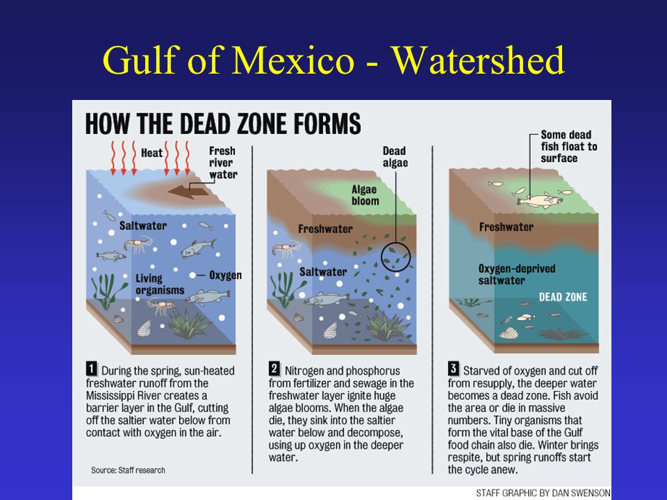 Gulf of Mexico - Watershed