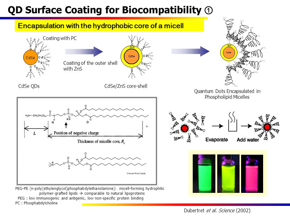 QD Surface Coating for Biocompatibility ① CdSe/ZnS core-shell Quantum Dots Encapsulated in Phospholipid Micelles CdSe QDs Dubertret et al.