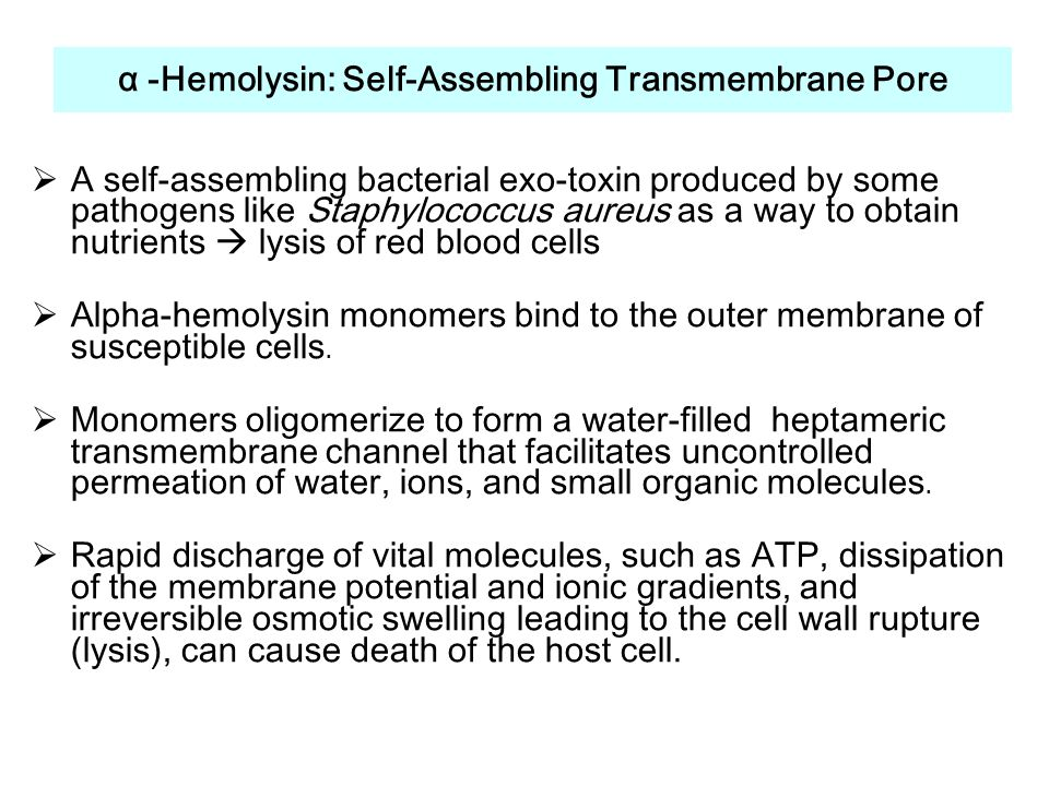 α -Hemolysin: Self-Assembling Transmembrane Pore  A self-assembling bacterial exo-toxin produced by some pathogens like Staphylococcus aureus as a way to obtain nutrients  lysis of red blood cells  Alpha-hemolysin monomers bind to the outer membrane of susceptible cells.