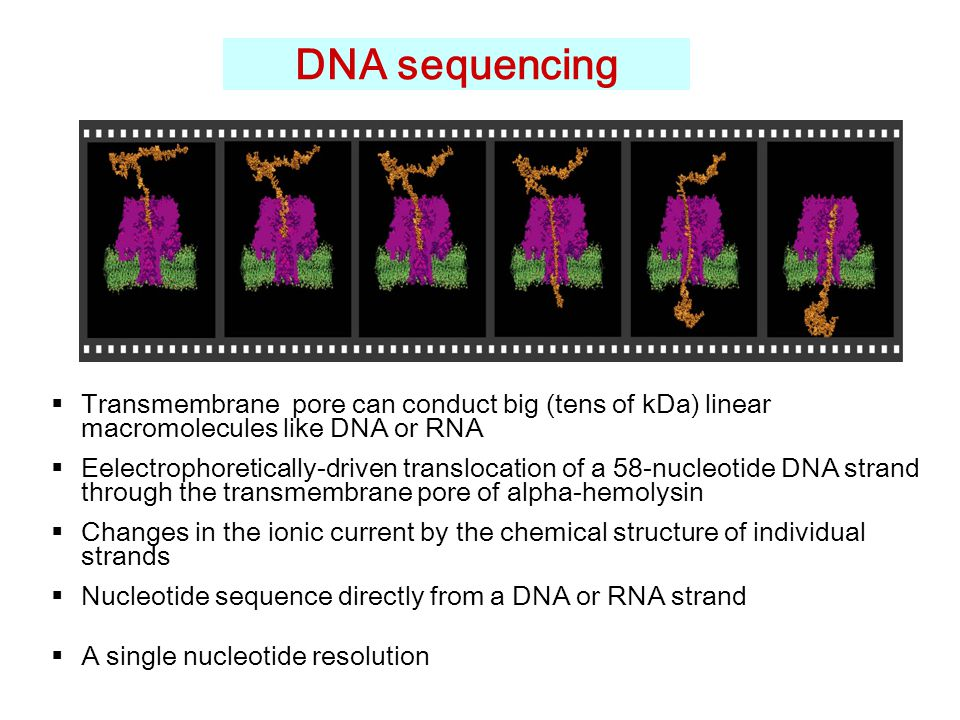 DNA sequencing  Transmembrane pore can conduct big (tens of kDa) linear macromolecules like DNA or RNA  Eelectrophoretically-driven translocation of a 58-nucleotide DNA strand through the transmembrane pore of alpha-hemolysin  Changes in the ionic current by the chemical structure of individual strands  Nucleotide sequence directly from a DNA or RNA strand  A single nucleotide resolution
