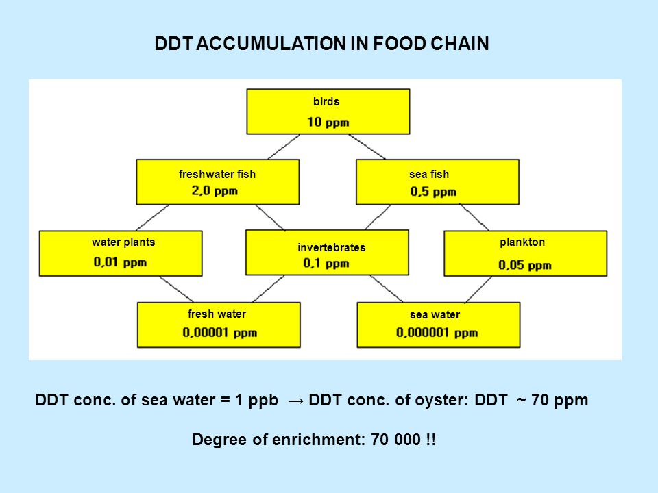 EFFECT OF DDT ACCUMULATION .