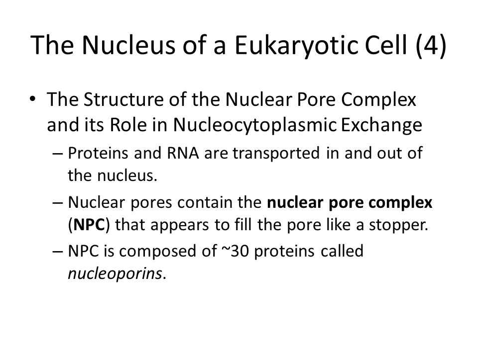The Nucleus of a Eukaryotic Cell (4) The Structure of the Nuclear Pore Complex and its Role in Nucleocytoplasmic Exchange – Proteins and RNA are trans