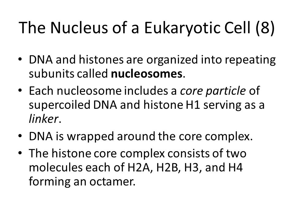 The Nucleus of a Eukaryotic Cell (8) DNA and histones are organized into repeating subunits called nucleosomes. Each nucleosome includes a core partic