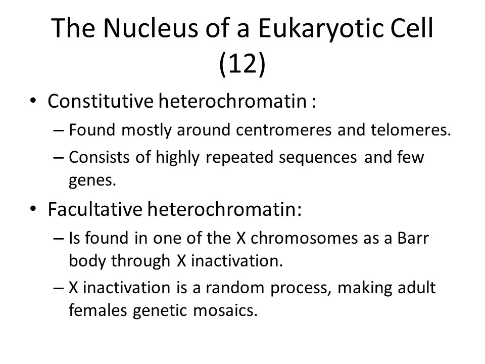 The Nucleus of a Eukaryotic Cell (12) Constitutive heterochromatin : – Found mostly around centromeres and telomeres. – Consists of highly repeated se