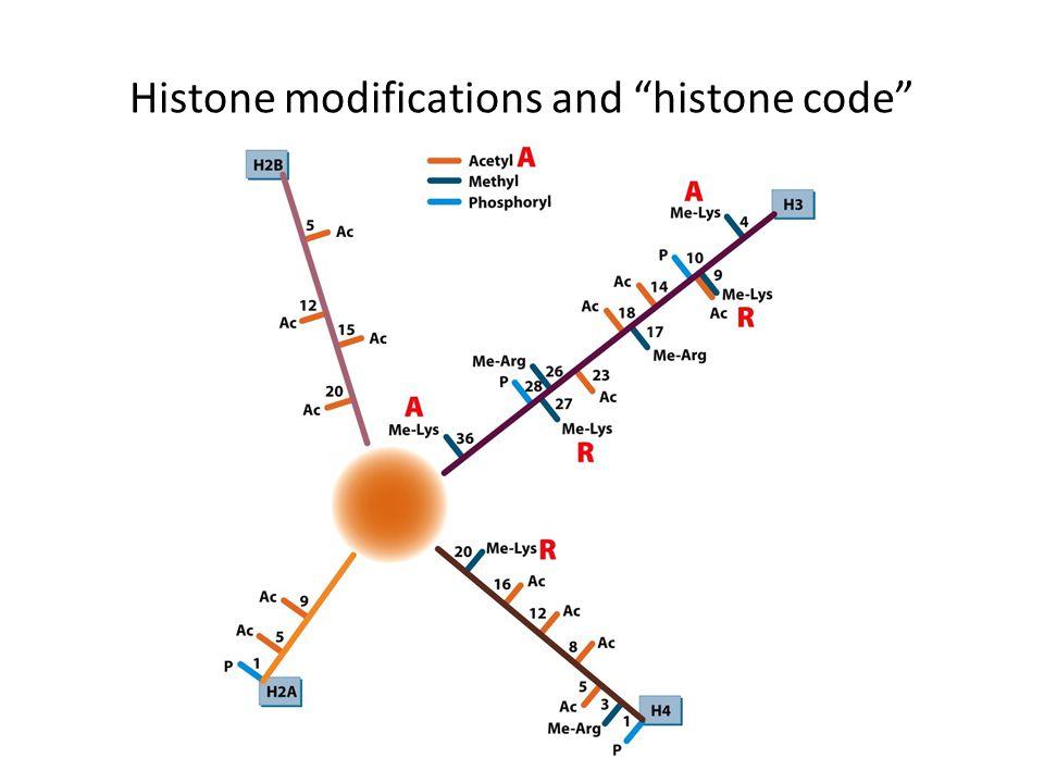 """Histone modifications and """"histone code"""""""