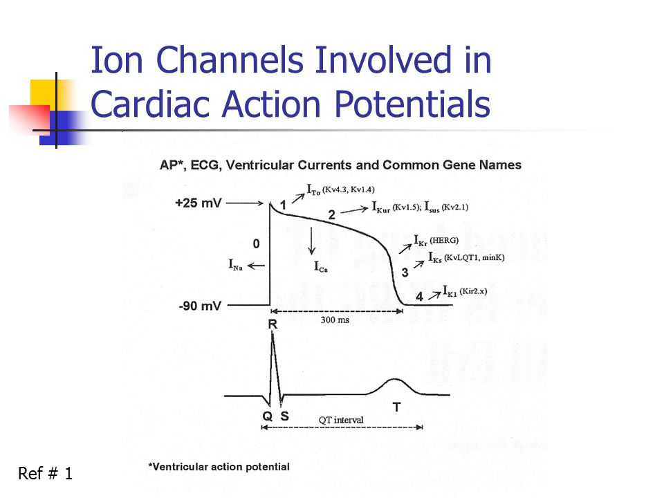 Ion Channels Involved in Cardiac Action Potentials Ref # 1