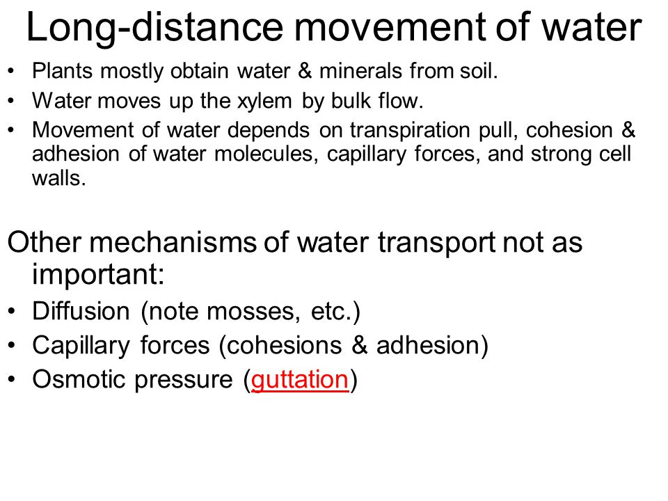 Long-distance movement of water Plants mostly obtain water & minerals from soil.