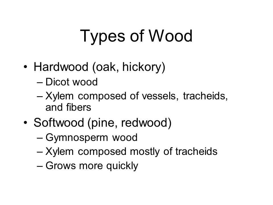 Types of Wood Hardwood (oak, hickory) –Dicot wood –Xylem composed of vessels, tracheids, and fibers Softwood (pine, redwood) –Gymnosperm wood –Xylem composed mostly of tracheids –Grows more quickly