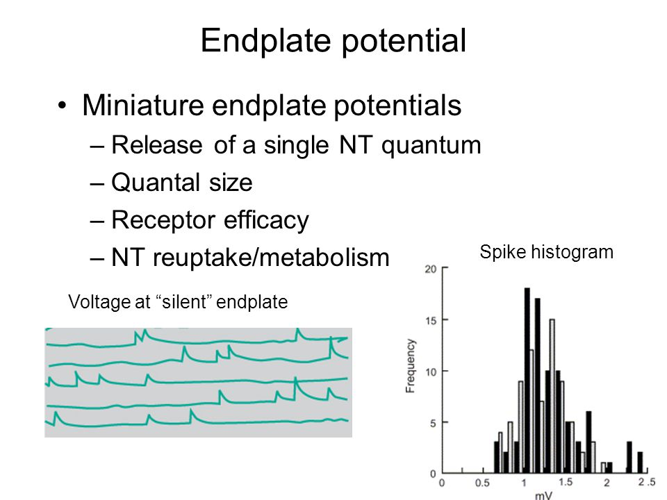 Endplate potential Miniature endplate potentials –Release of a single NT quantum –Quantal size –Receptor efficacy –NT reuptake/metabolism Voltage at silent endplate Spike histogram