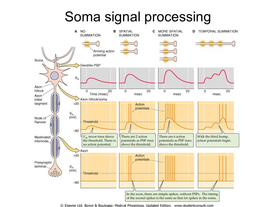 Soma signal processing