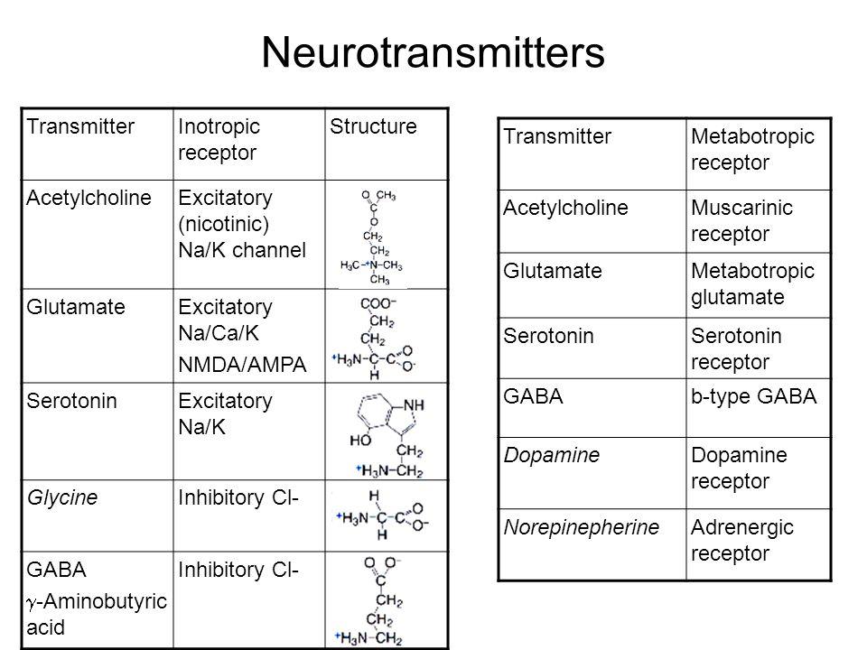 Neurotransmitters TransmitterInotropic receptor Structure AcetylcholineExcitatory (nicotinic) Na/K channel GlutamateExcitatory Na/Ca/K NMDA/AMPA SerotoninExcitatory Na/K GlycineInhibitory Cl- GABA  -Aminobutyric acid Inhibitory Cl- TransmitterMetabotropic receptor AcetylcholineMuscarinic receptor GlutamateMetabotropic glutamate SerotoninSerotonin receptor GABAb-type GABA DopamineDopamine receptor NorepinepherineAdrenergic receptor