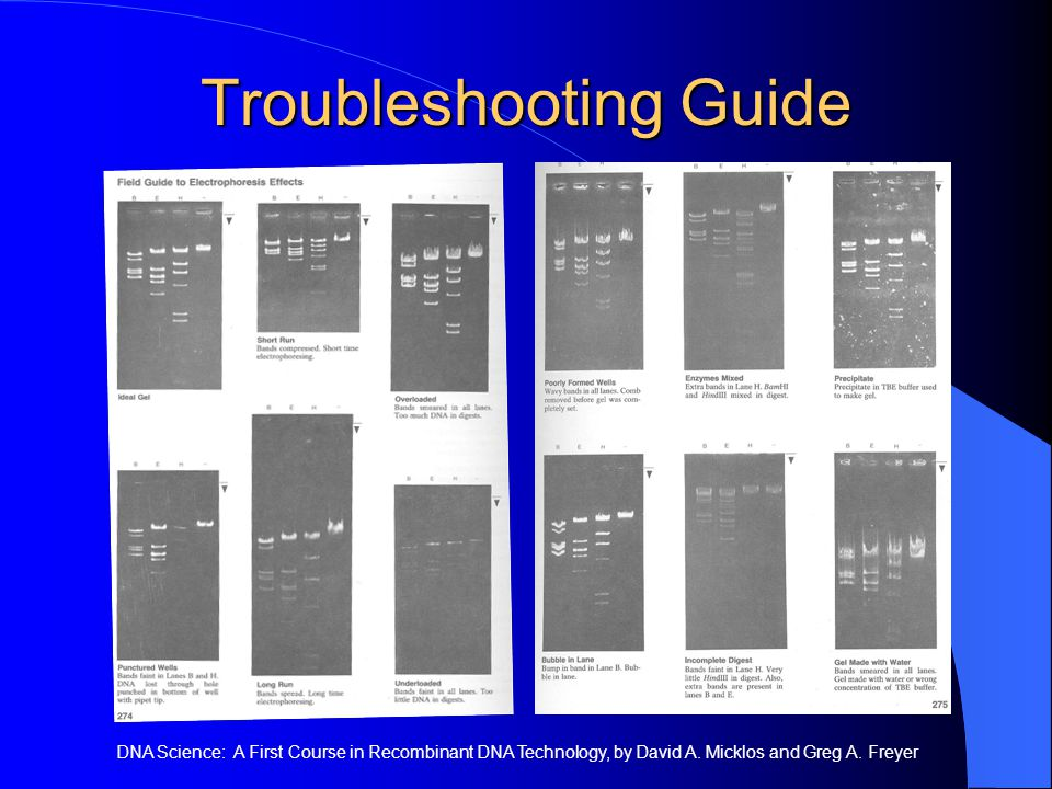 Troubleshooting Guide DNA Science: A First Course in Recombinant DNA Technology, by David A.