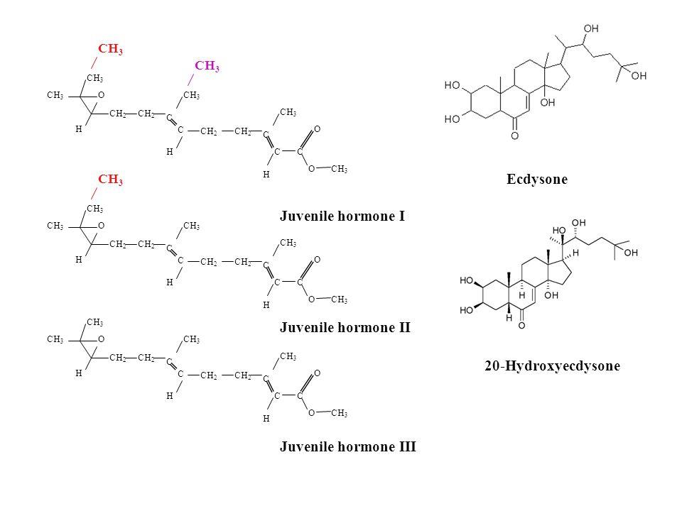 CH 2 CH 3 CH 2 O O O C C C H H H C C CH 3 CH 2 CH 3 CH 2 O O O C C C H H H C C CH 3 CH 2 CH 3 CH 2 O O O C C C H H H C C Ecdysone Juvenile hormone I Juvenile hormone II Juvenile hormone III 20-Hydroxyecdysone