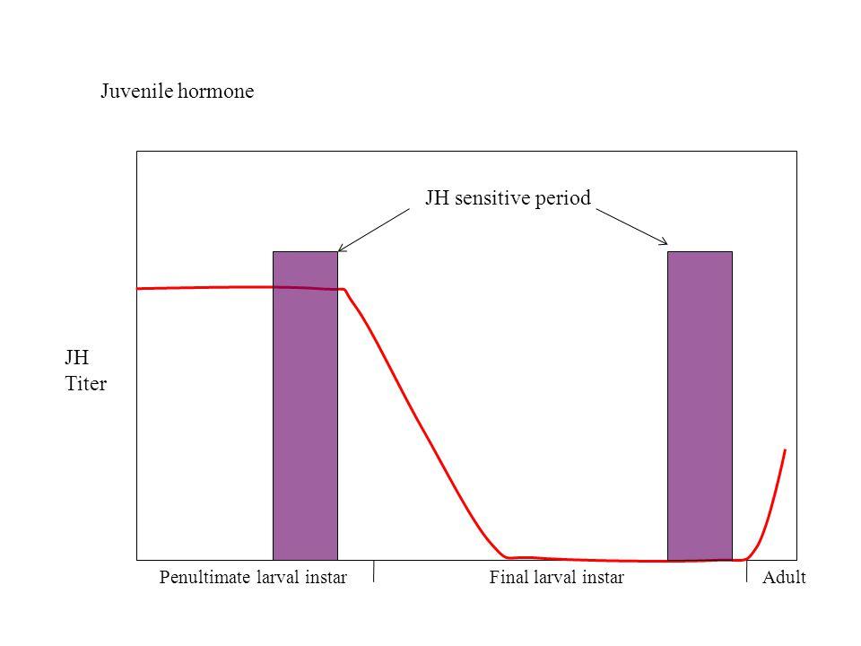 Juvenile hormone Penultimate larval instarFinal larval instarAdult JH sensitive period JH Titer