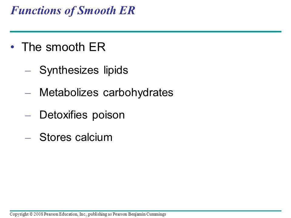 Functions of Smooth ER The smooth ER – Synthesizes lipids – Metabolizes carbohydrates – Detoxifies poison – Stores calcium Copyright © 2008 Pearson Education, Inc., publishing as Pearson Benjamin Cummings