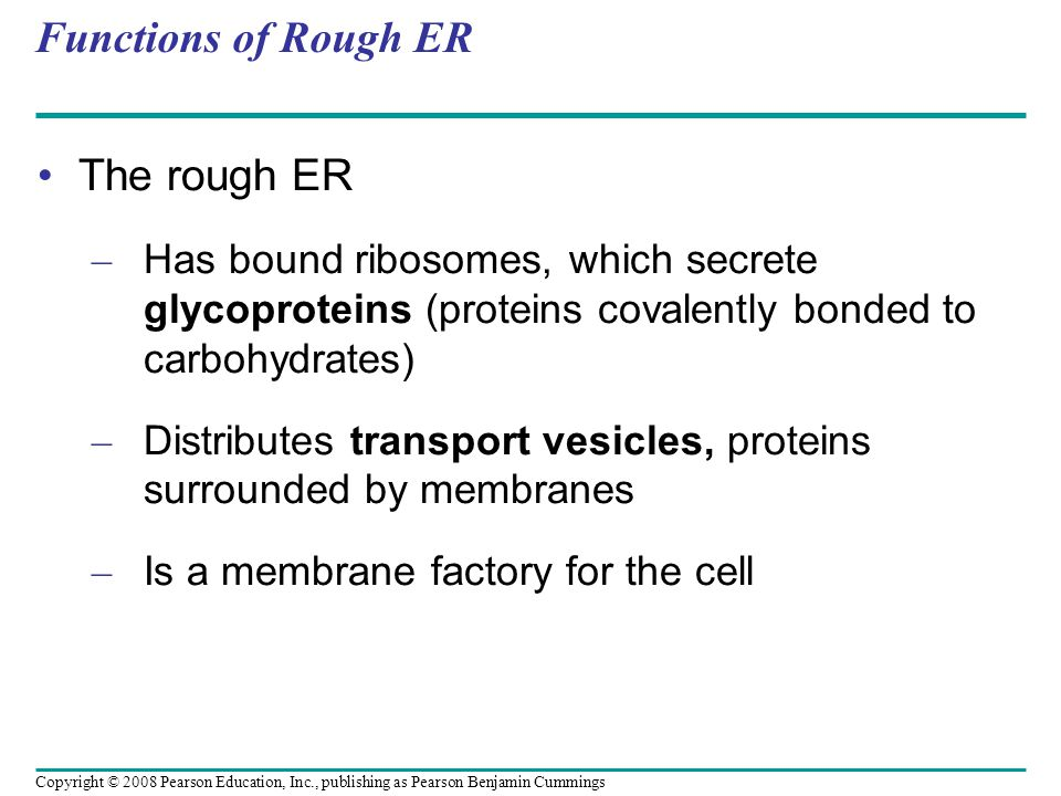 Functions of Rough ER The rough ER – Has bound ribosomes, which secrete glycoproteins (proteins covalently bonded to carbohydrates) – Distributes transport vesicles, proteins surrounded by membranes – Is a membrane factory for the cell Copyright © 2008 Pearson Education, Inc., publishing as Pearson Benjamin Cummings