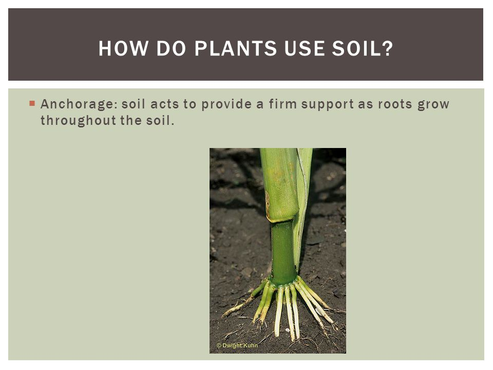  Earthworms, ants, crawfish, moles, and other organisms improve the soil tilth, the ease at which soil can be worked.
