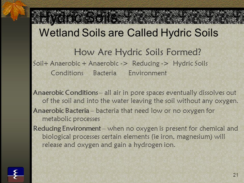 21 Hydric Soils: Wetland Soils are Called Hydric Soils How Are Hydric Soils Formed.