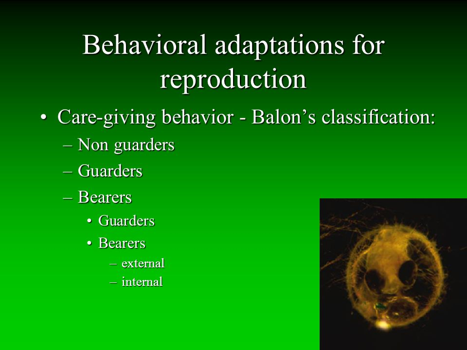 Behavioral adaptations for reproduction Care-giving behavior - Balon's classification:Care-giving behavior - Balon's classification: –Non guarders –Gu