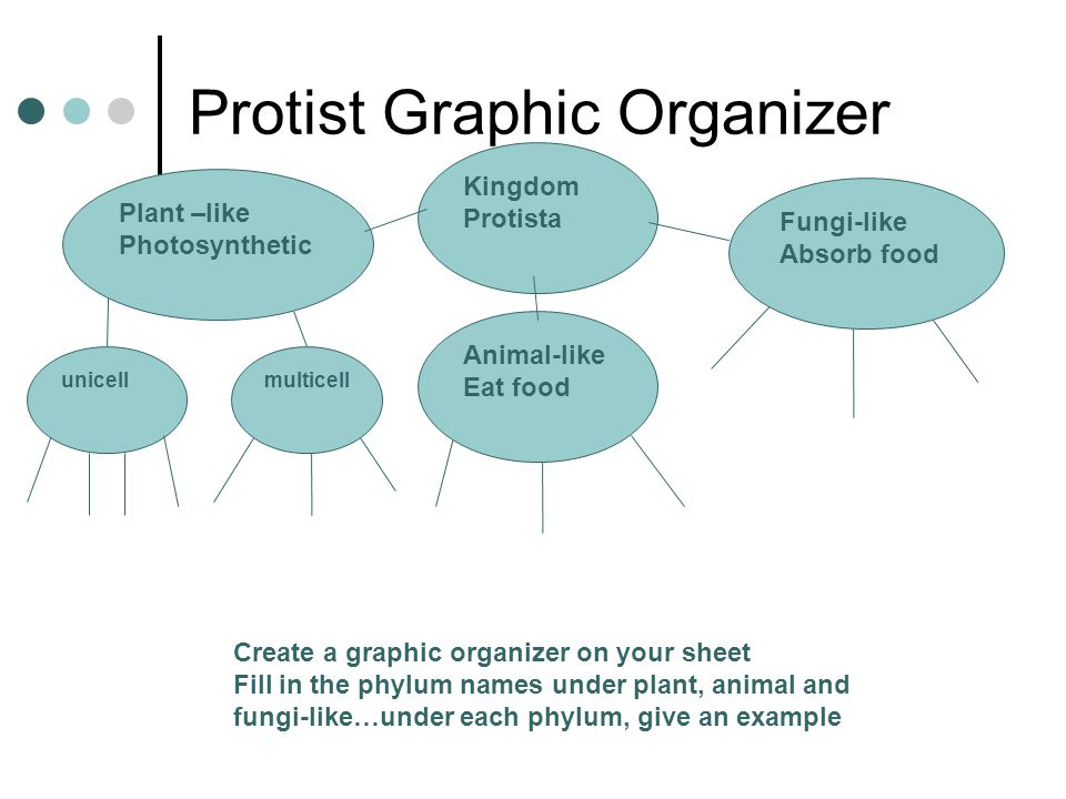 Protist Graphic Organizer Kingdom Protista Fungi-like Absorb food Animal-like Eat food Plant –like Photosynthetic unicellmulticell Create a graphic organizer on your sheet Fill in the phylum names under plant, animal and fungi-like…under each phylum, give an example