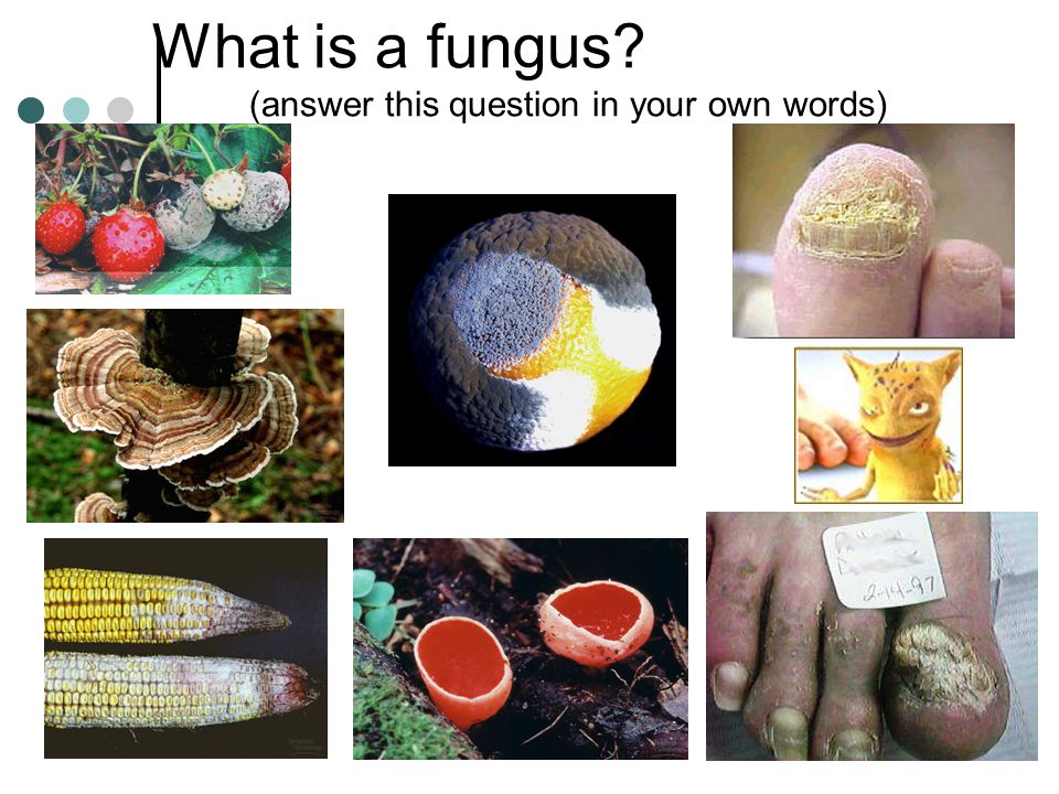 What is a fungus (answer this question in your own words)