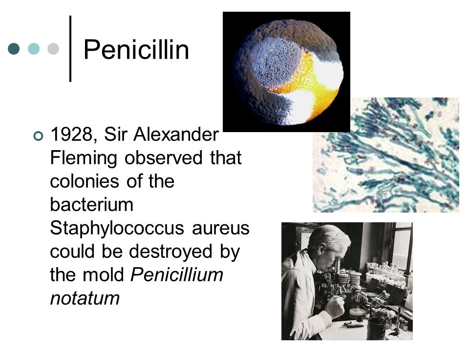 Penicillin 1928, Sir Alexander Fleming observed that colonies of the bacterium Staphylococcus aureus could be destroyed by the mold Penicillium notatum