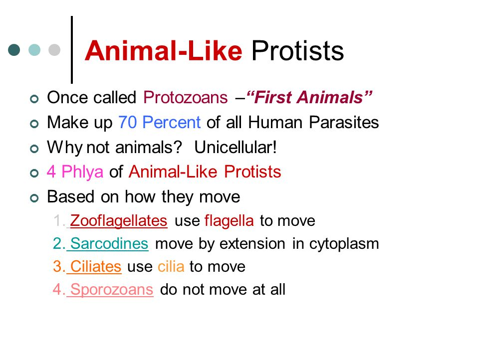 Animal-Like Protists Once called Protozoans – First Animals Make up 70 Percent of all Human Parasites Why not animals.