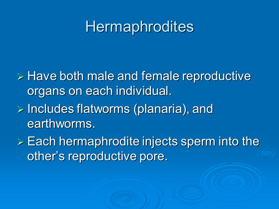 Hermaphrodites  Have both male and female reproductive organs on each individual.