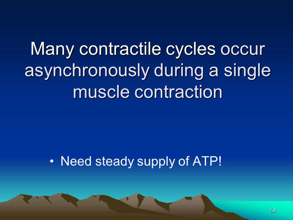53 Rigor mortis  Myosin cannot release actin until a new ATP molecule binds  Run out of ATP at death, cross-bridges never release