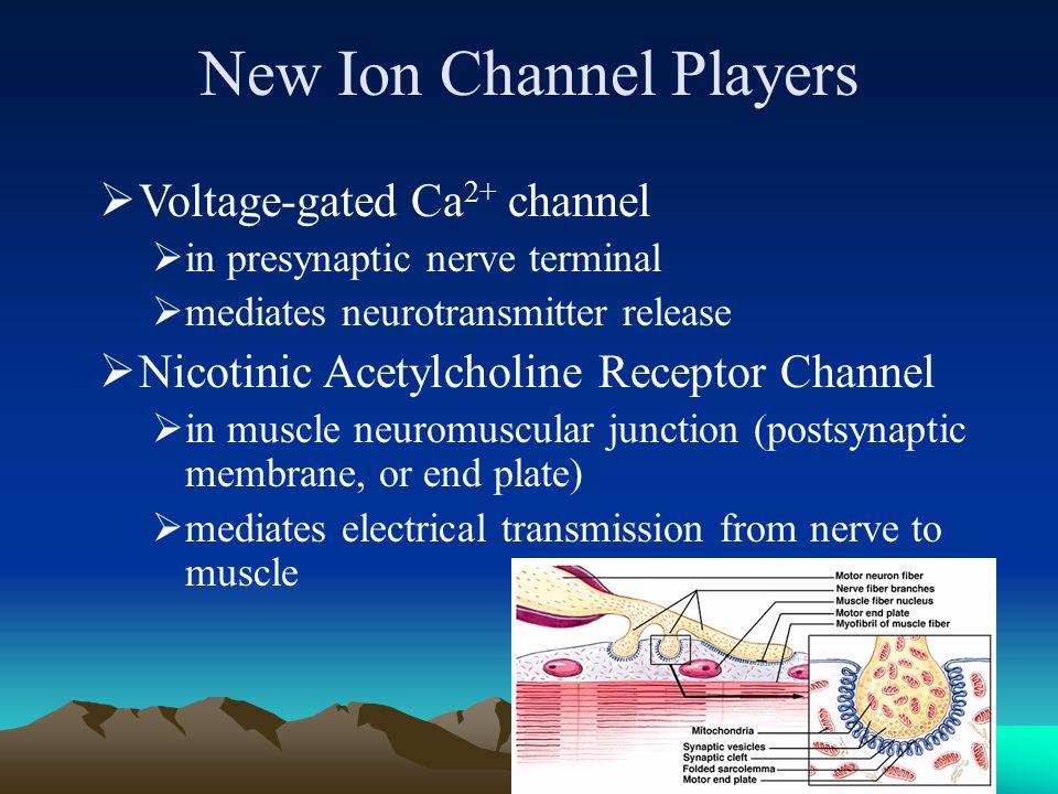 7 Illustration of the Neuromuscular Junction (NMJ)