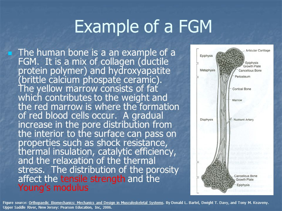 Example of a FGM The human bone is a an example of a FGM.