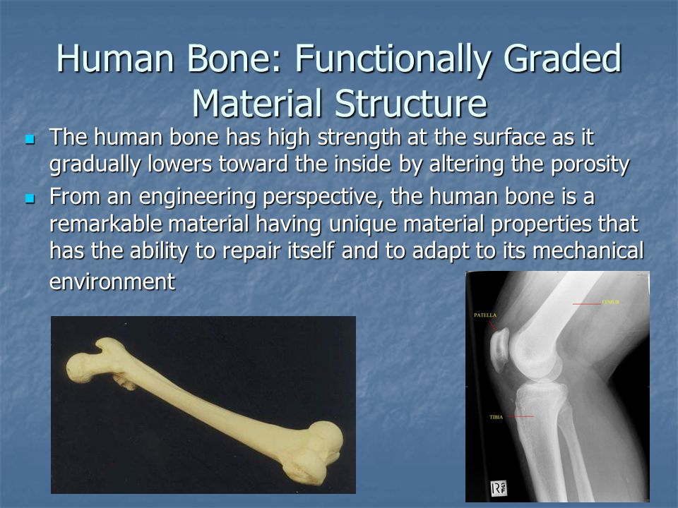 Human Bone: Functionally Graded Material Structure The human bone has high strength at the surface as it gradually lowers toward the inside by altering the porosity The human bone has high strength at the surface as it gradually lowers toward the inside by altering the porosity From an engineering perspective, the human bone is a remarkable material having unique material properties that has the ability to repair itself and to adapt to its mechanical environment From an engineering perspective, the human bone is a remarkable material having unique material properties that has the ability to repair itself and to adapt to its mechanical environment