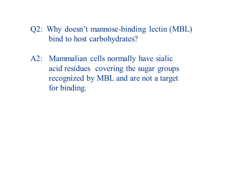 Q2: Why doesn't mannose-binding lectin (MBL) bind to host carbohydrates.