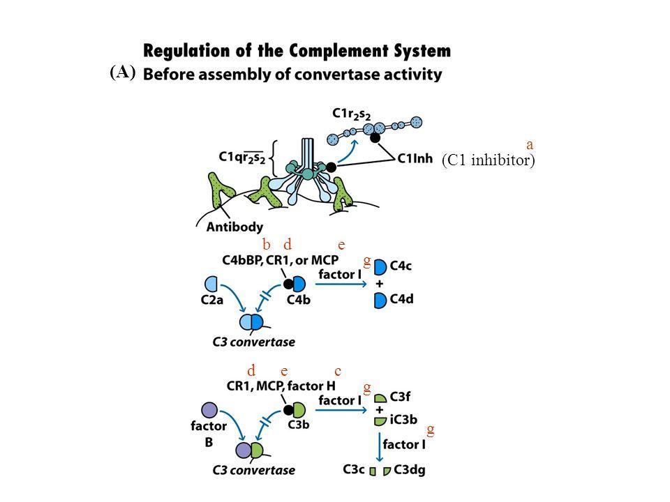 a (C1 inhibitor) b d e g d e c g g (A)