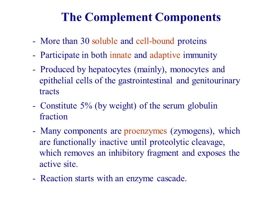 The Complement Components - More than 30 soluble and cell-bound proteins - Participate in both innate and adaptive immunity - Produced by hepatocytes (mainly), monocytes and epithelial cells of the gastrointestinal and genitourinary tracts - Constitute 5% (by weight) of the serum globulin fraction - Many components are proenzymes (zymogens), which are functionally inactive until proteolytic cleavage, which removes an inhibitory fragment and exposes the active site.