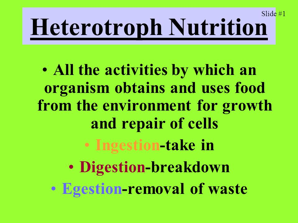 Heterotroph Nutrition All the activities by which an organism obtains and uses food from the environment for growth and repair of cells Ingestion-take in Digestion-breakdown Egestion-removal of waste Slide #1