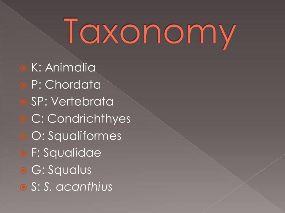  K: Animalia  P: Chordata  SP: Vertebrata  C: Condrichthyes  O: Squaliformes  F: Squalidae  G: Squalus  S: S.