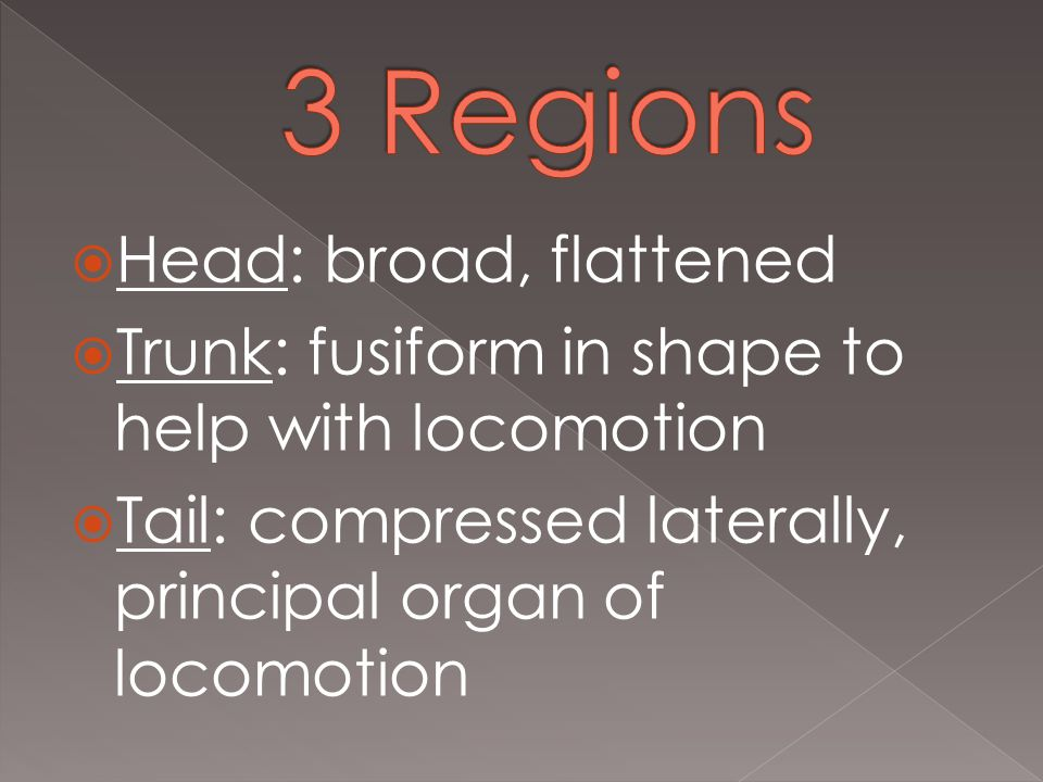  Head: broad, flattened  Trunk: fusiform in shape to help with locomotion  Tail: compressed laterally, principal organ of locomotion