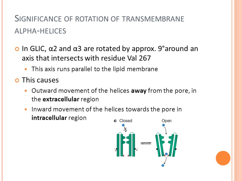 S IGNIFICANCE OF ROTATION OF TRANSMEMBRANE ALPHA - HELICES In GLIC, α2 and α3 are rotated by approx.