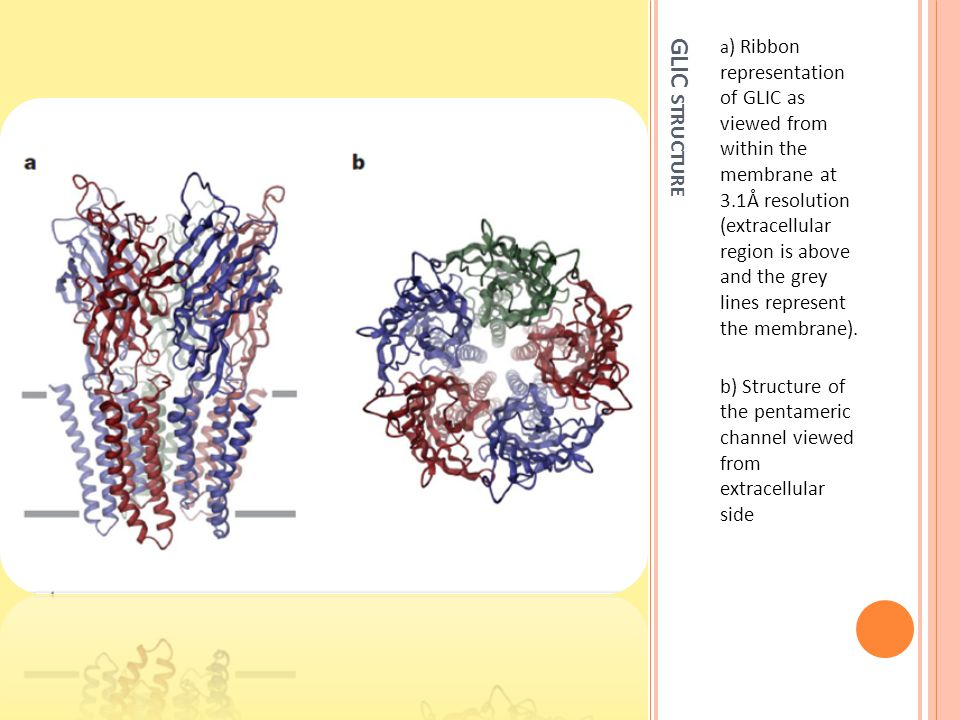 R EFERENCES https://eee.uci.edu/11w/05868/papersforinclasspresent ations/ligand- gated_ion_channel_Nature_2009_Dutzler.pdf http://www.nature.com/nature/journal/v457/n7225/ext ref/nature07461-s1.pdf