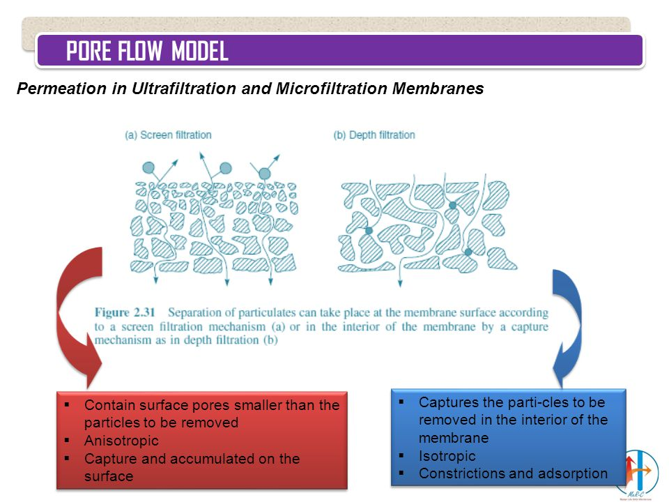 PORE FLOW MODEL Permeation in Ultrafiltration and Microfiltration Membranes  Contain surface pores smaller than the particles to be removed  Anisotr